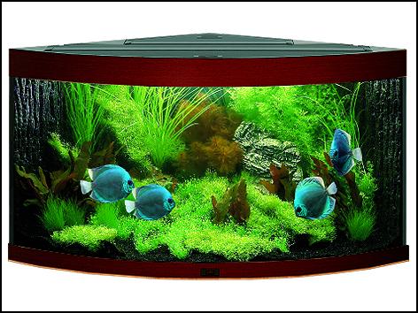 Akvárium set JUWEL Trigon 350 tmavě hnědé 350l POUZE OSOBNÍ ODBĚR